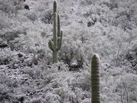 winter in Arizona